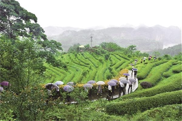 福建森林康养激发生态旅游新活力