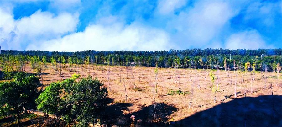林草价值网链全国森林面积达2.2亿公顷